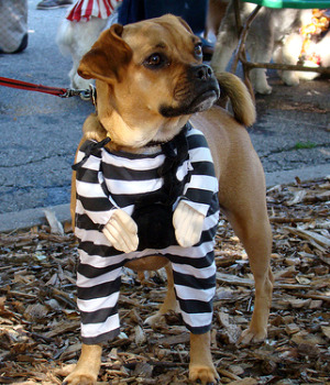inmates training dogs