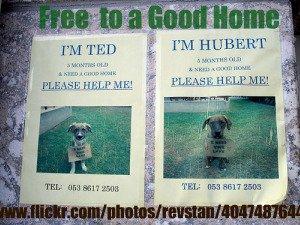 Free Dog Adoptions